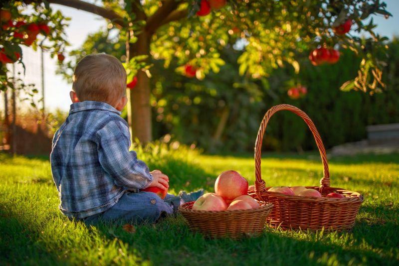 Conservarea recoltei din grădină - delicatese organice nu numai pentru bebeluși și copii